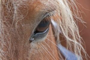 horse-1006456_1280